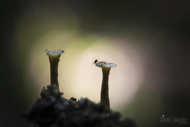 Climbing the fungus