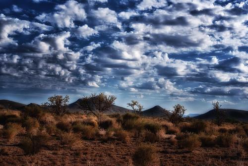 sunrise kingmanarizona landscape cloads sky cindyslater montains weather chollacactus cautus az usa