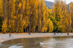 Fall colours at lake Wanaka, New Zealand