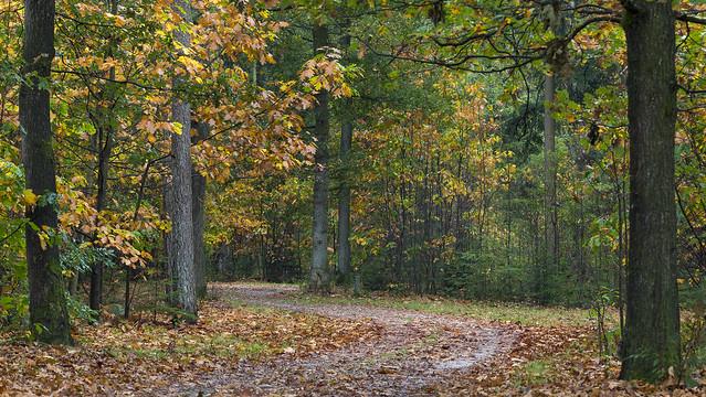 herfstkleuren in het bos - Foto: Karin Broekhuijsen