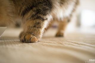 [高雄 寵物攝影] 波斯貓 垂耳兔 | by cold0328