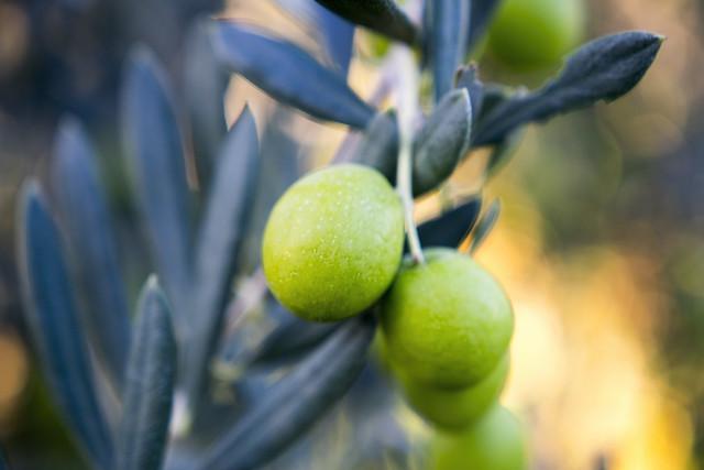 Olives time