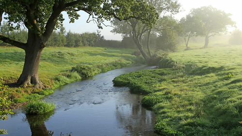 mist misty morning weather river riverwey hampshire uk england countryside water trees oak riverbank sunrise nature green tranquil peaceful bentley flora treesinthepicture smileonsaturday explore
