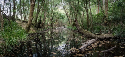 landscape streamscape crawfordriver australianrivers riparianarf pool river trees midnorthcoast nsw australia australianlandscape