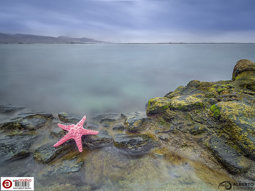 What if there were starfish in Las Canteras? (Synthetic resin starfish) 01   by Alesfra