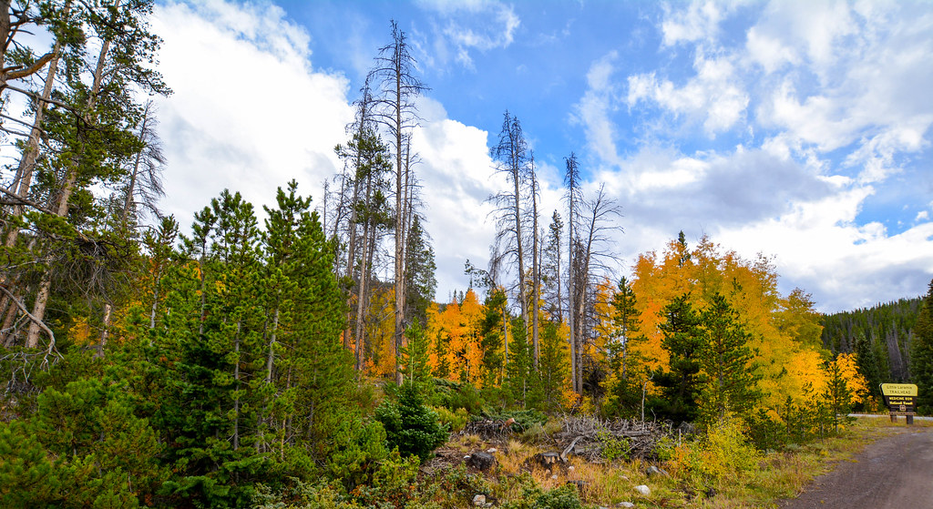 Medicine Bow National Forest | In Wyoming State      A recen