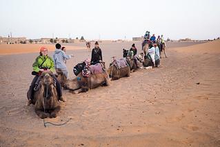 Camel caravan resting