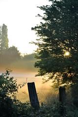 Meadow | Mist | Sunrise