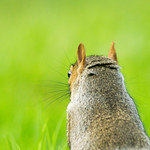 Squirrel's Eye View