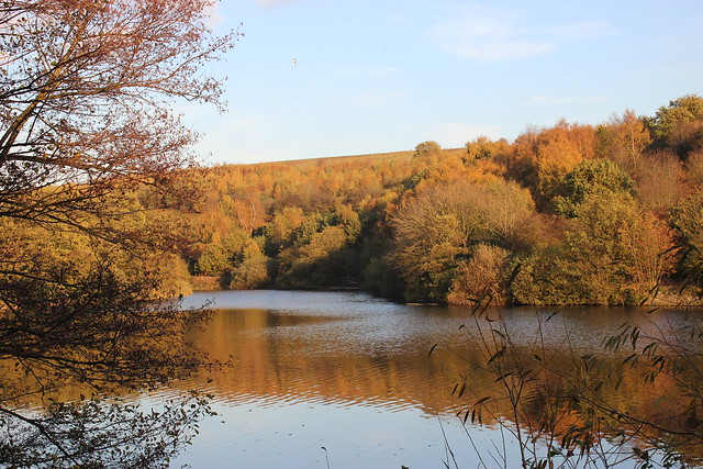 Autumnal nature reserve