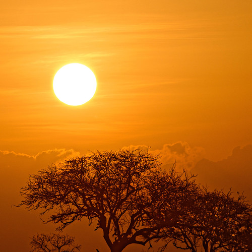 orange morning sunny safari sunrise