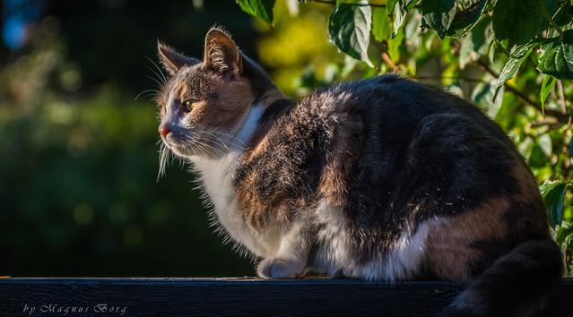 Kitty gazing into the setting sun