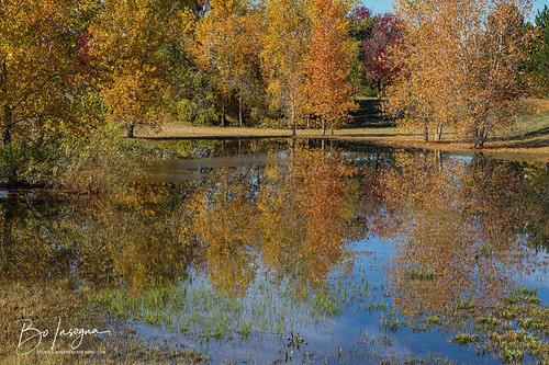 reflections water ponds autumn fall foliage trees leaves forest colorful colorado beautiful views nature landscapes coloradolandscapes scenic travel jamesinsogna seasons erie unitedstates
