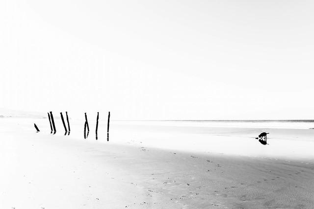 82/100: Bleached beach