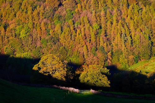 autumn bowland d610 england lancashire landscape morning nikon sunrise