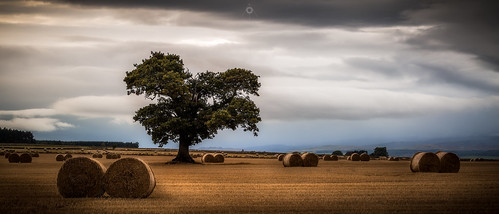 autumn perthshire scotland strawbales leefilters tree landscape fields bales countryside canon harvest clouds field unitedkingdom gb