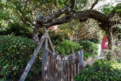 Filbert Street stairs live oak