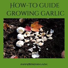 Pinterest Pin Growing Garlic | by hippiebohochic