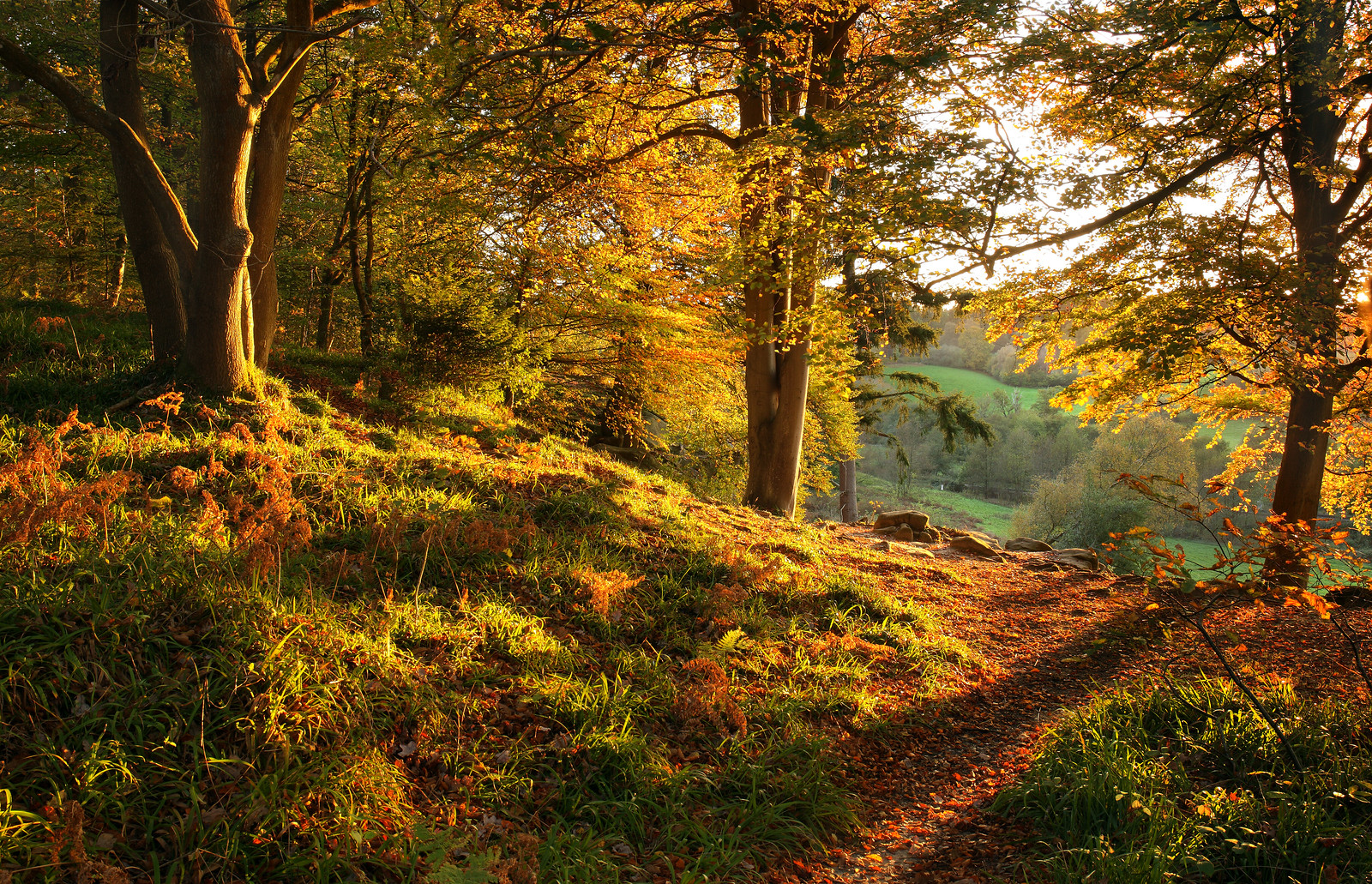 Sunset in an Autumn Woodland