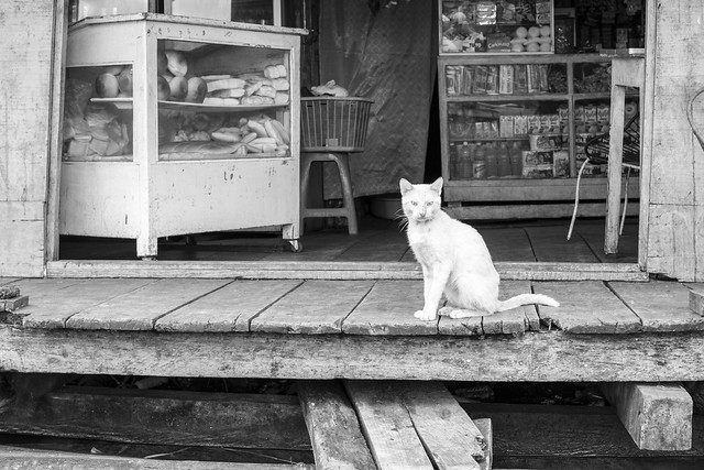 Waiting Cat, Belen Village, Iquitos, Peru