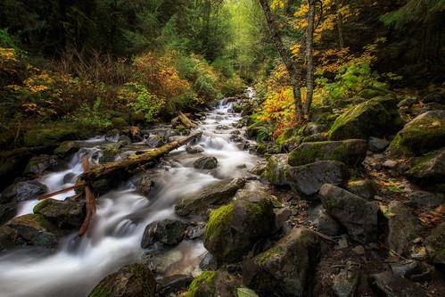 boulders trees autumn creek changecreek rocks stream forest olalliestatepark