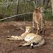 Tenikwa Wildlife Centre, Plettenberg, Western Cape, South Africa