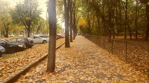 streetview autumn fallenleaves autumncolors camilressubdv