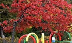 Stanley Park Fall Walk