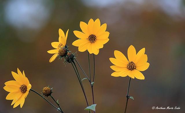 Wild flowers of October