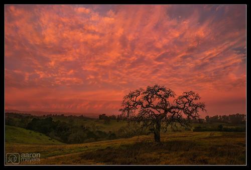 aaronmeyersphotography arastradero arastraderopreserve california d800 february nikon nikond800 oak oaktree paloalto sunrise virga beam clouds escaype landscape lightbeam nature tree