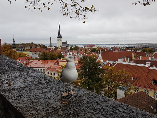 Tallinn + orädd trut