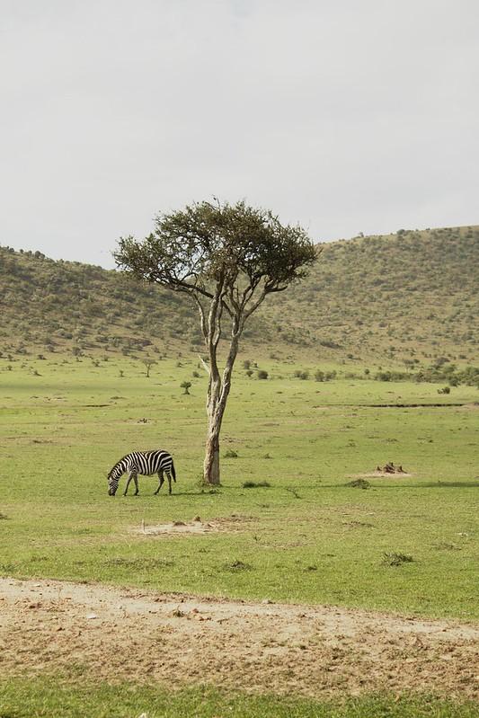 Maasai Mara 1 12