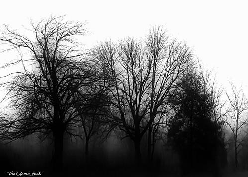nature blackwhite monochrome fog foggy gloomy bw blackandwhite