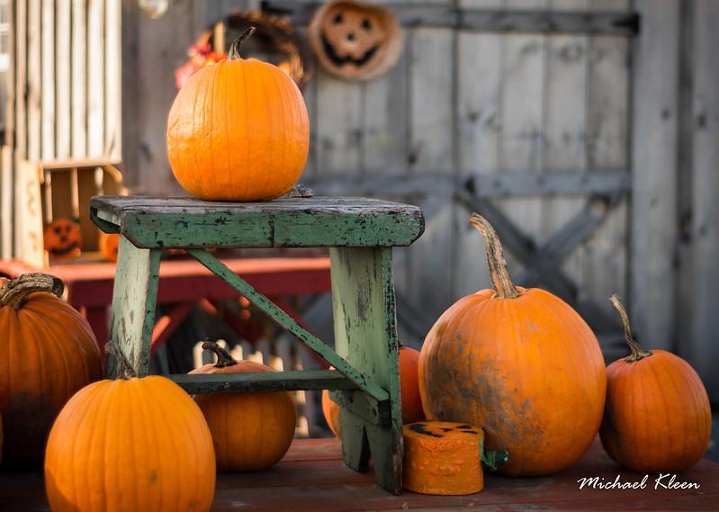 Autumn Harvest 6