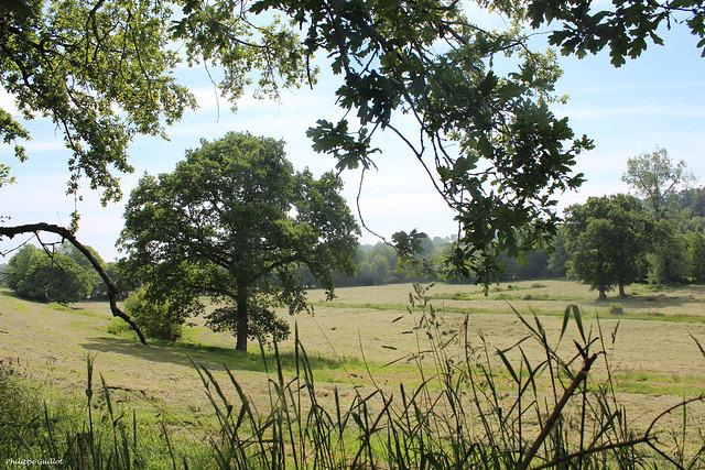 Dans la vallée de la Soulle à Montpinchon