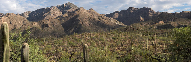 Sun and shadow on the Catalinas from Sabino Canyon