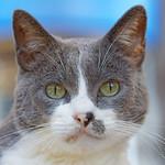 Meow Monday - What About Bob?