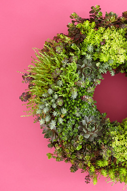 living succulent plant wreath on pink background
