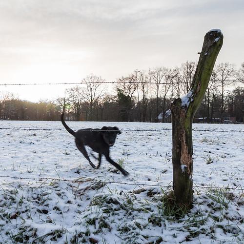 Snow doggo | by jrnlnssn