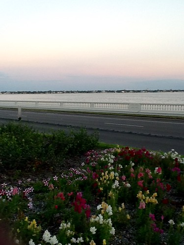 ocean bayshore flowers sky outdoors road tampa florida sunset photo