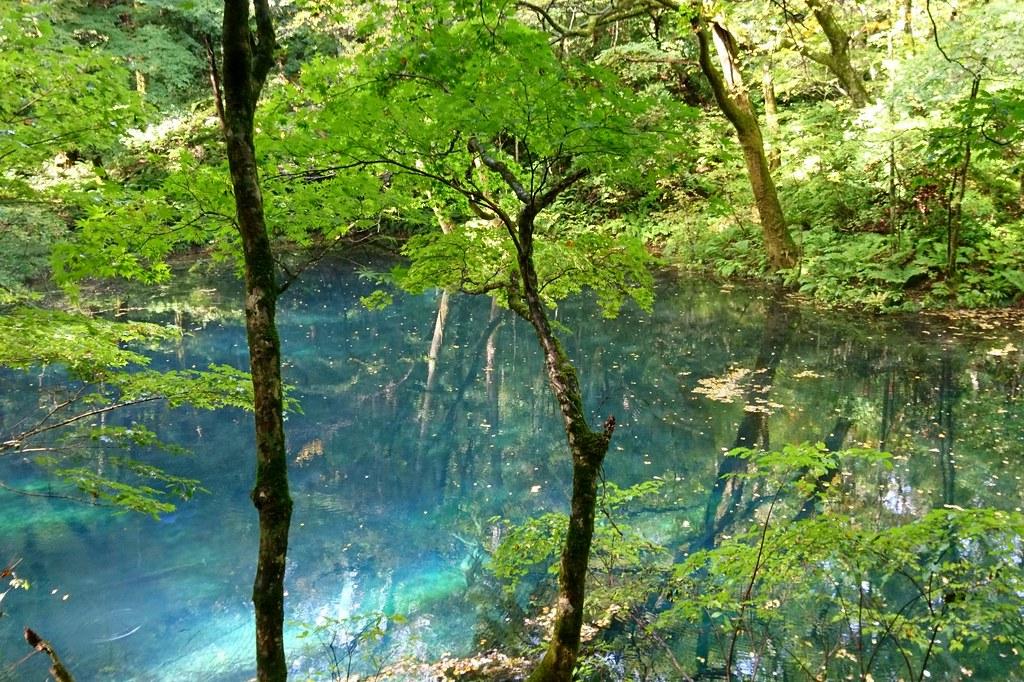 白神山地 十二湖沸壺の池 Irene C Flickr