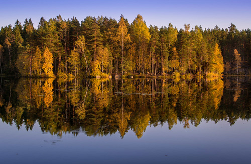 forest reflection colorful colors autumn yellow pond water pine tree trees leaves peaceful nuuksio national park espoo finland