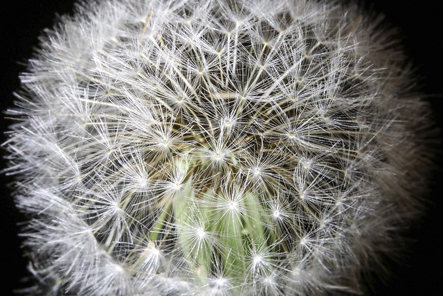 Flickr Friday - The Beautiful Geometry of Nature