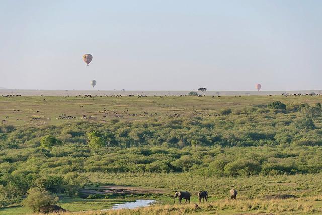 African Safari. Busy morning in savanna.