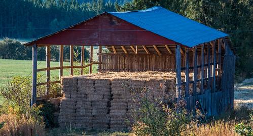 2017 bc britishcolumbia canada cropped nikon nikond750 nikonfx tedmcgrath tedsphotos vignetting shed hay farm outside field sunrise roof tinroof metalroof blueroof shrub agriculture