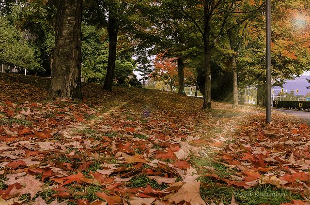 Fall Season & Red Leaves