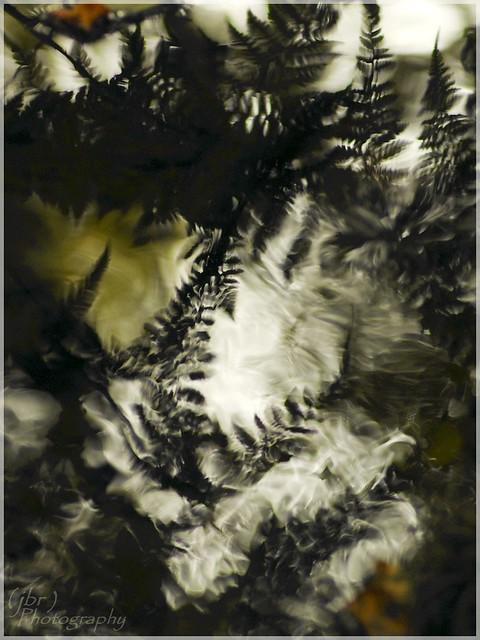 Reflet des fougères en sous-bois au bord du ruisseau
