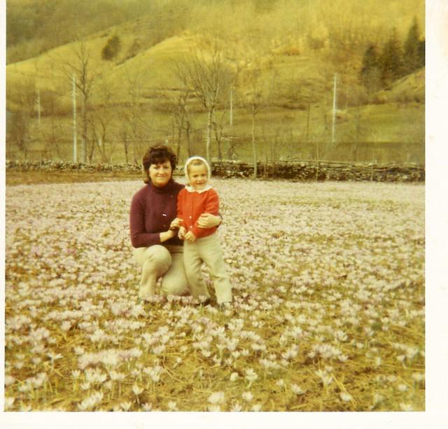 L'Alto Adige e le sue erbe officinali ...