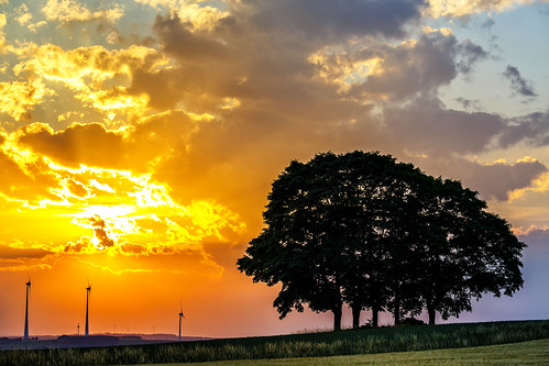 five trees landscape sunset raitschin hof germany wind turbines fields cereals