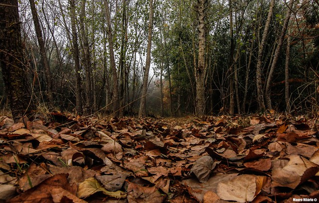 Walking seasons